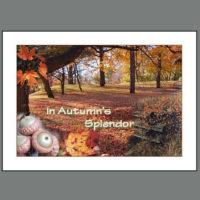 THKSG – 001 In Autumn's Splendor