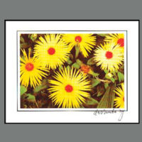 398 Yellow Flowers with red center