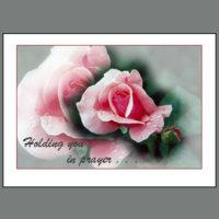 INP-002 Rose – in prayer