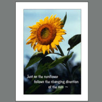 Life-008 Sunflower Signs Transition