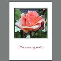 THK-005A Salmon Rose ~ Thank You