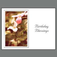 424 Trillium Birthday