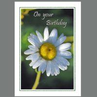 BRT-039 Birthday Daisy